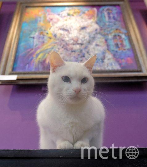 """Главный герой выставки – эрмитажный кот Ахилл. Фото Алена Бобрович, """"Metro"""""""