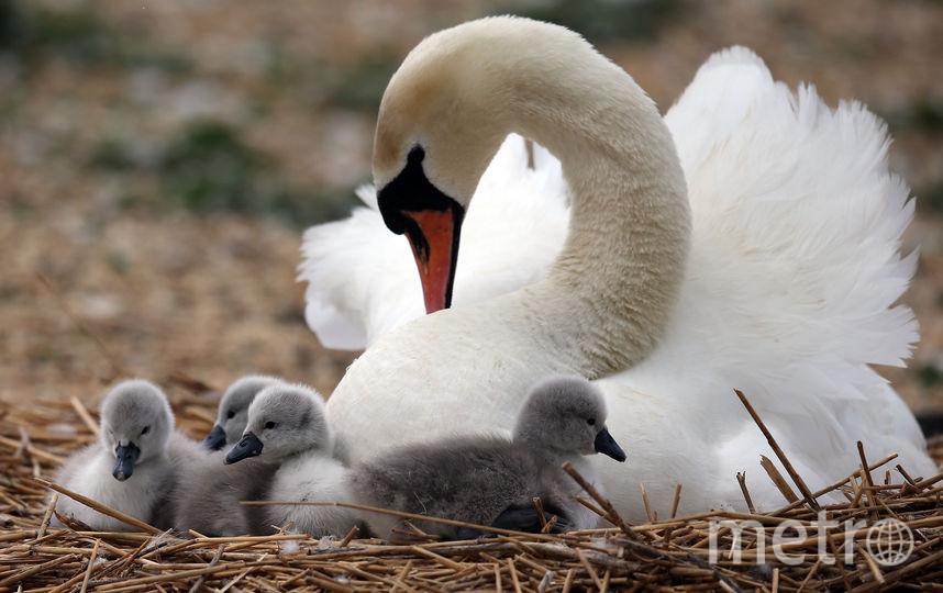У птиц начинается период гнездования. Фото Getty