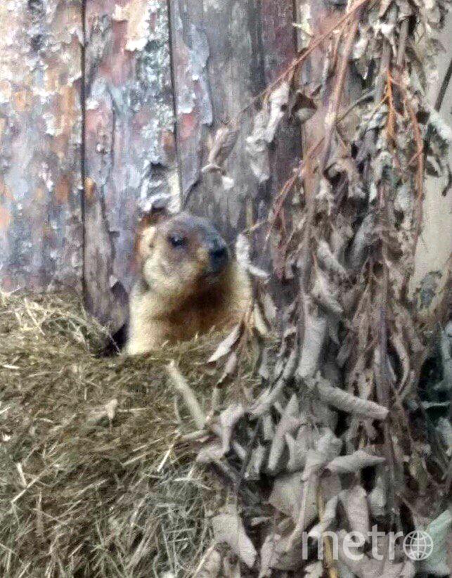 Сурки Ленинградского зоопарка вышли иззимней спячки