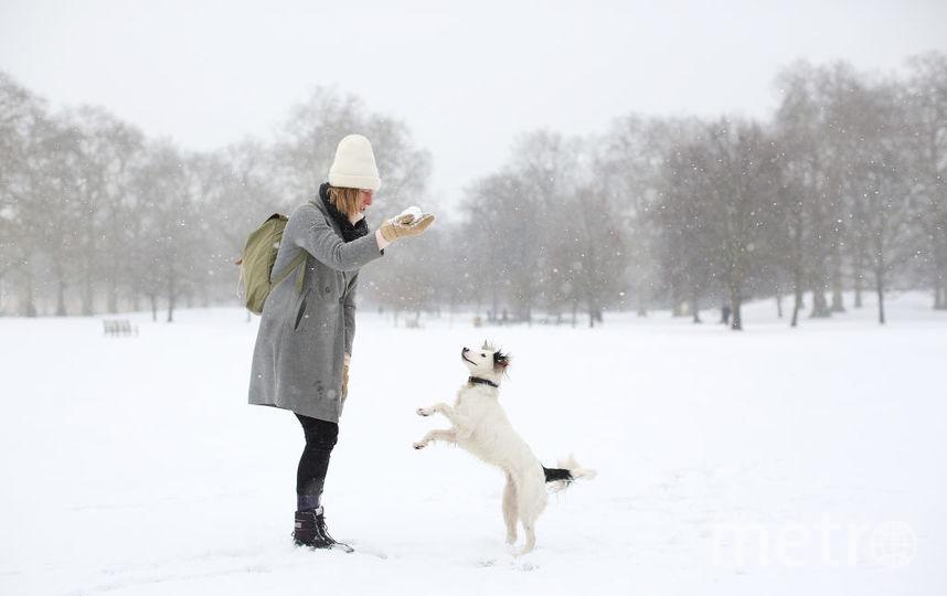 Учёные рассказали, почему собаке нельзя чесать живот. Фото Getty