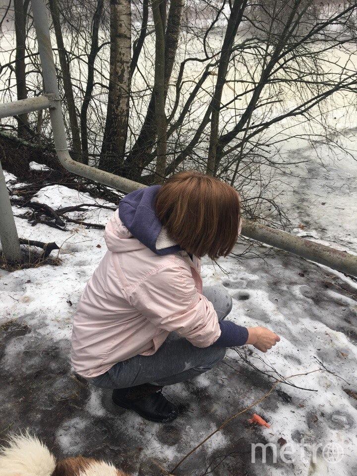 В Ленобласти девушка спасла собаку из ледяной воды: Фото. Фото ДТП и ЧП | Санкт-Петербург | Питер Онлайн | СПб, vk.com