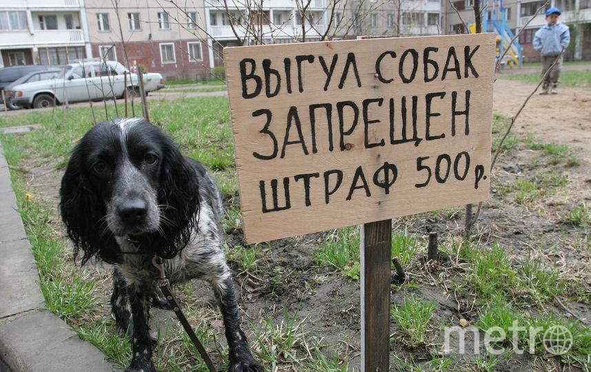 Собак нельзя выгуливать возле школ, больниц, любых детских учреждений. Фото Замир Усманов | ТАСС