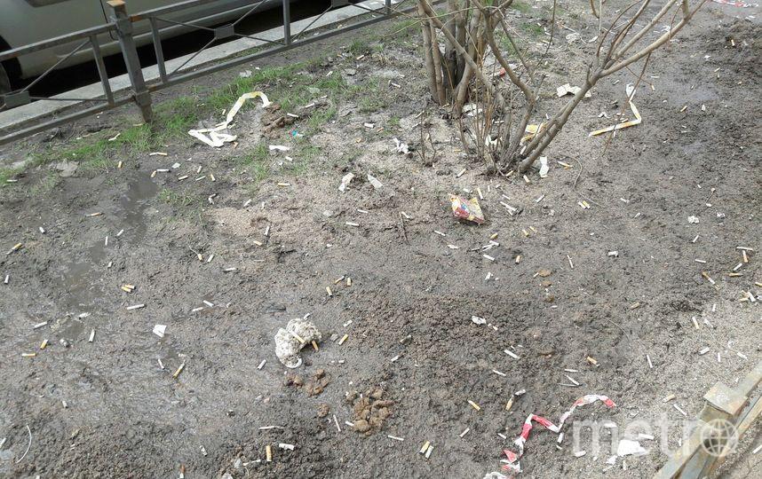 """«Рассада» из окурков и собачьих экскрементов. Фото Софья Сажнева, """"Metro"""""""