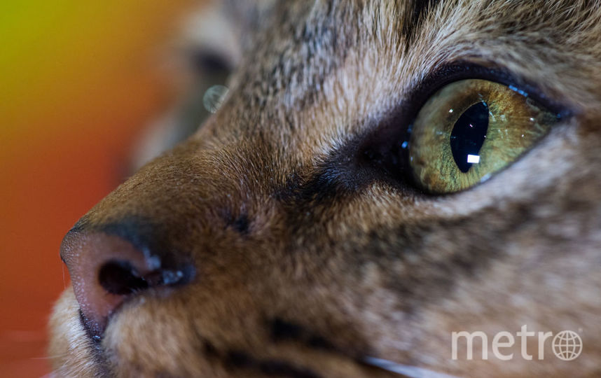 Кошка напала на своих хозяев в Москве. Фото Getty