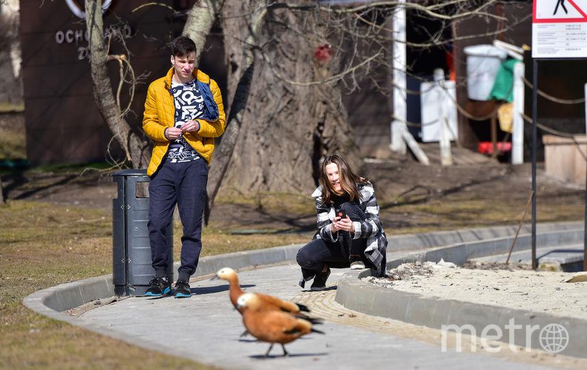 """Мы прошлись по паркам и узнали, кому повезло оказаться """"на свободе"""" и вдоволь искупаться в лучах весеннего солнышка. Фото Василий Кузьмичёнок"""