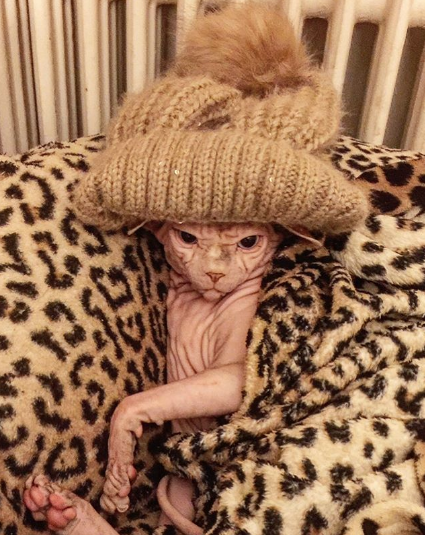 Канадский сфинкс Джердан. Фото www.instagram.com/xherdanthenakedcat