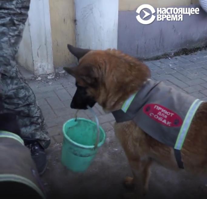 Россиянин бросил работу ради спасения собак: Видео. Фото Скриншот: www.currenttime.tv