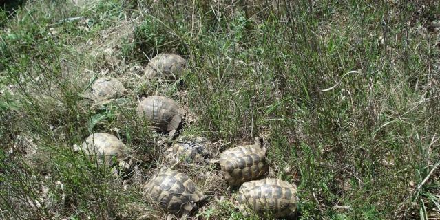 60 черепах теперь живут в Утришском заповеднике.