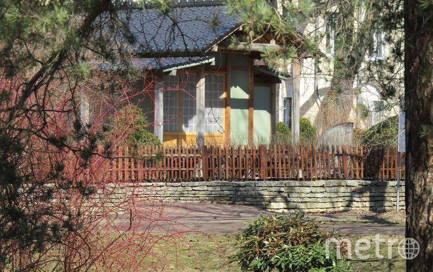 Ботанический сад. Фото Галина Стурова /vk.com/botsad_spb, vk.com