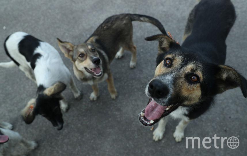 Бездомные собаки. Фото Getty