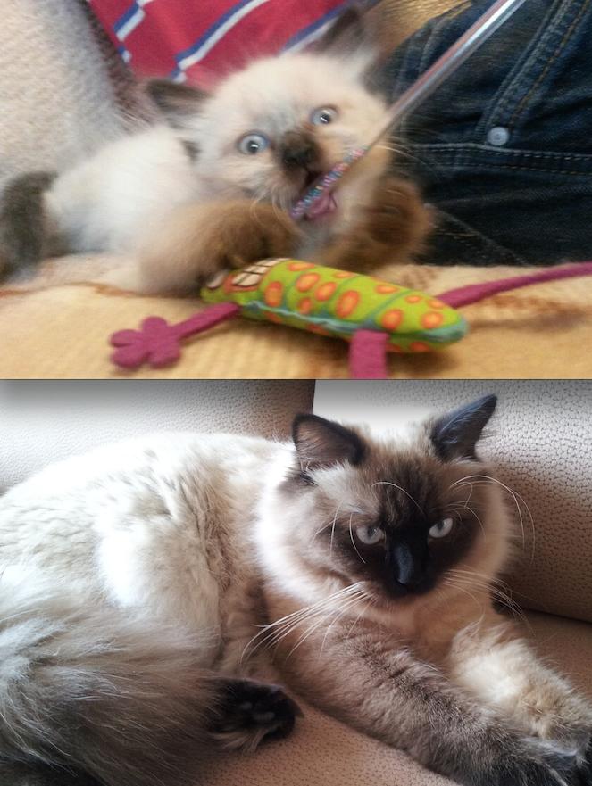 Чарлик в 1,5 месяца и в 11 месяцев. Фото Александра