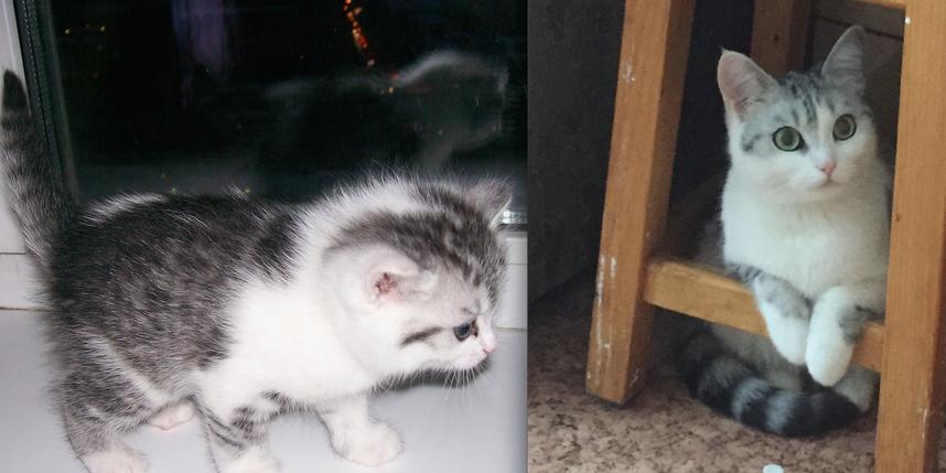 Добрый день, это наша кошка Тиграша. Она член нашей семьи. Мы вместе 5 лет. На первом фоте она котенком, нам подарили ее друзья. Ей тут 4 недели и один день. Второе фото-ей тут 5 лет. Фото Марьяна