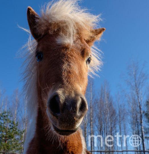 """Пони Капучино – самый молодой и перспективный актёр. Фото Алена Бобрович, """"Metro"""""""