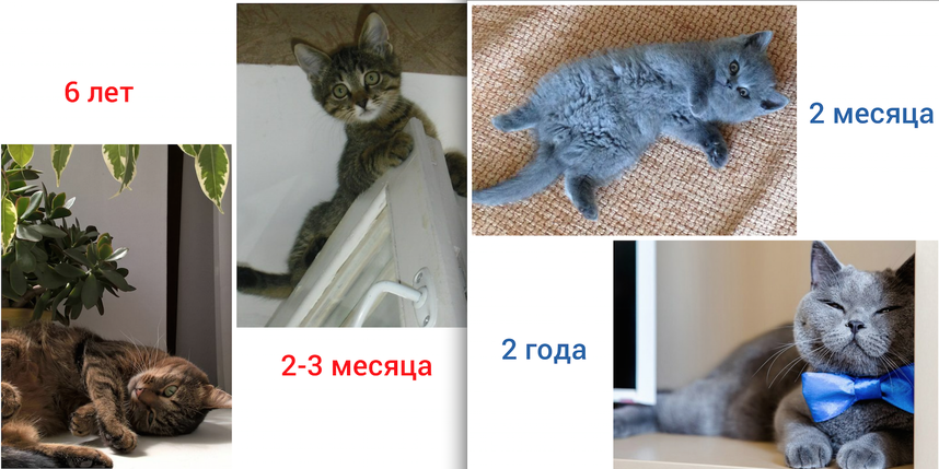 Это наши котики: полосатая кошечка Фея (взяли с улицы) и серенький котик Феликс (купили в магазине). Фото Юлия