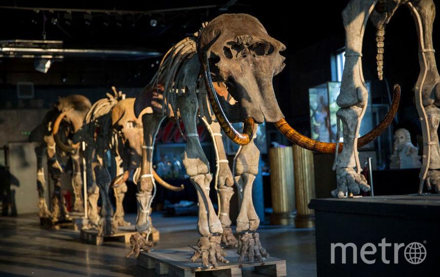 Ученые возродят мамонтов для спасения климата Арктики