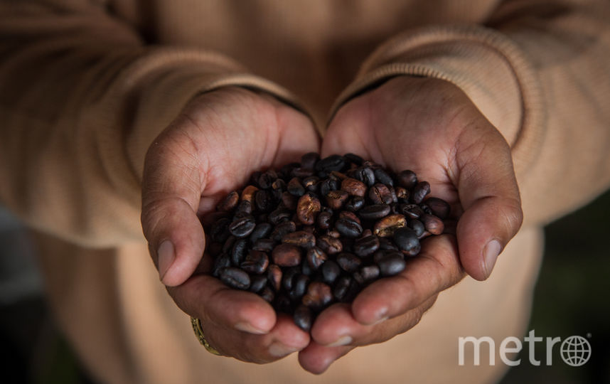 Кофейные зёрна. Фото Getty