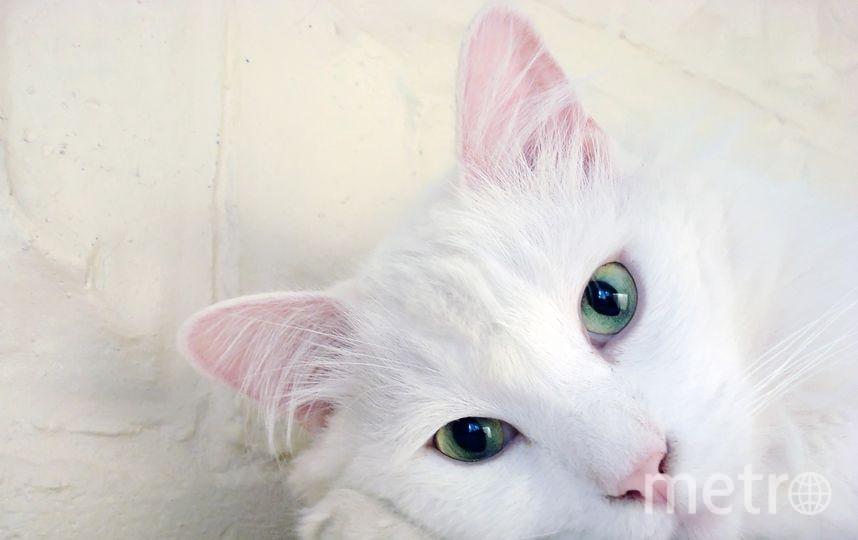 """Владельцы кошек на 40% меньше подвержены риску инфаркта, так как """"кошачьи"""" вибрации снижают артериальное давление. Фото Pixabay"""