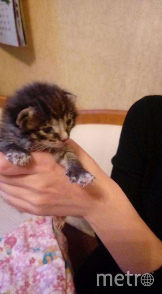Спасённый котёнок. Фото Мария Николаева