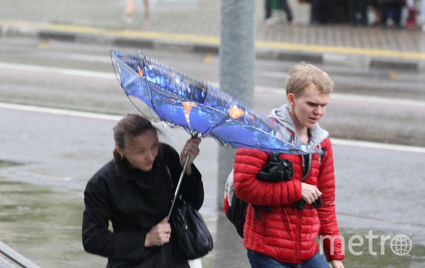 В Москве ожидается штормовой ветер с порывами до 25 м/с. Фото Василий Кузьмичёнок