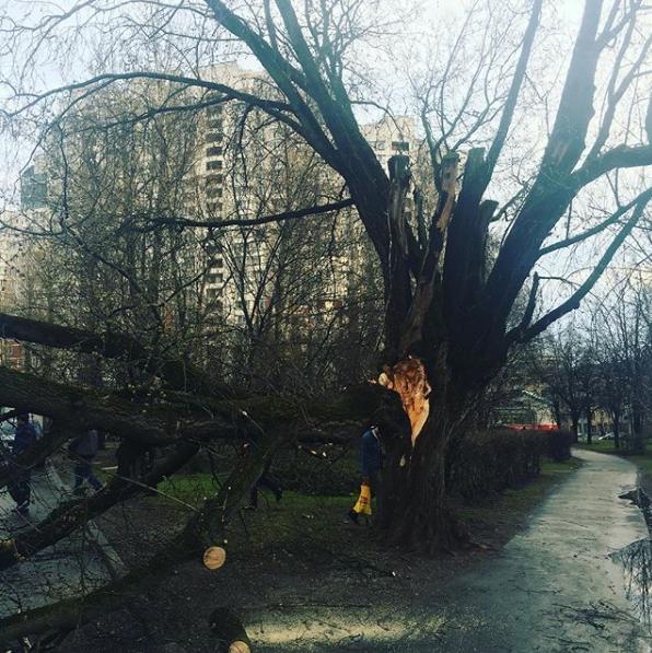 Москвичи и жители подмосковья публикуют фото последствий урагана в соцсетях. Фото Скриншот Instagram: alexey_okara