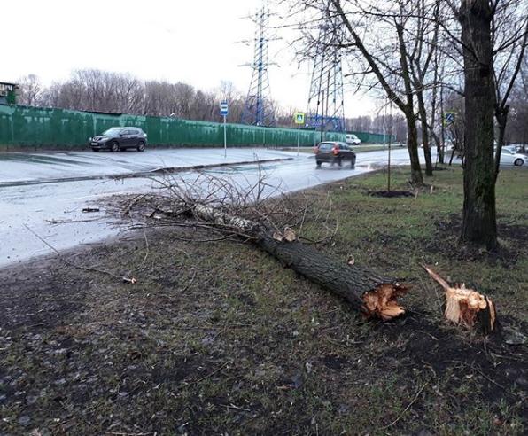 Москвичи и жители подмосковья публикуют фото последствий урагана в соцсетях. Фото Скриншот Instagram: khaninatv