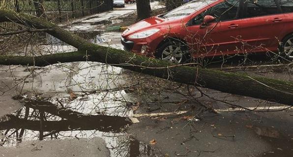 Вырванные с корнем деревья и снесённые крыши: кадры последствий урагана в Москве