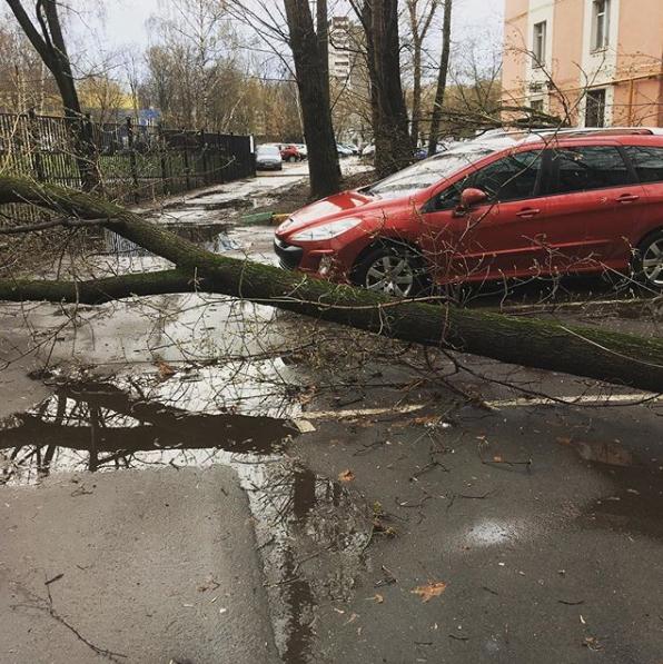 Москвичи и жители подмосковья публикуют фото последствий урагана в соцсетях. Фото Скриншот Instagram: kolandelita