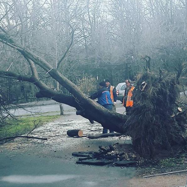 Москвичи и жители подмосковья публикуют фото последствий урагана в соцсетях. Фото Скриншот Instagram: kulagina9921