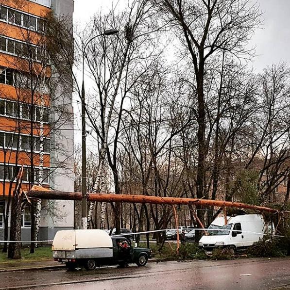 Москвичи и жители подмосковья публикуют фото последствий урагана в соцсетях. Фото Скриншот Instagram: sademda