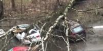 Ураган в Москве оказался смертельным: стало известно о первых жертвах