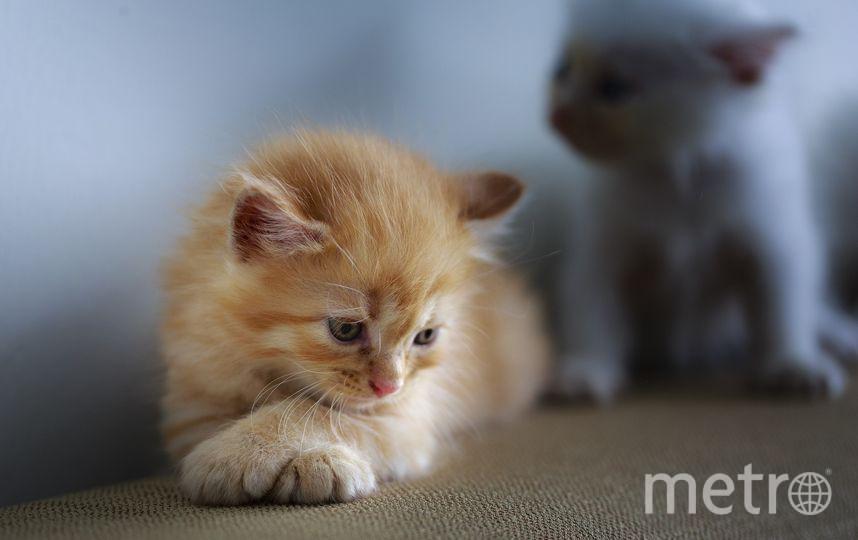 В Эрмитаже выберут горожанина, который лучше всего относится к кошкам. Фото Pixabay.com