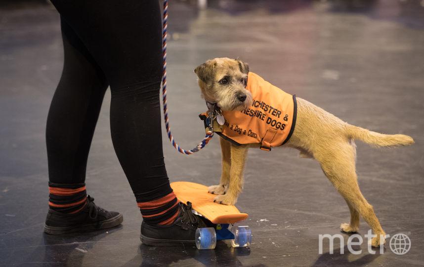Ролики и скейтборды завоёвывают всё большую популярность у разных возрастов. Фото Getty