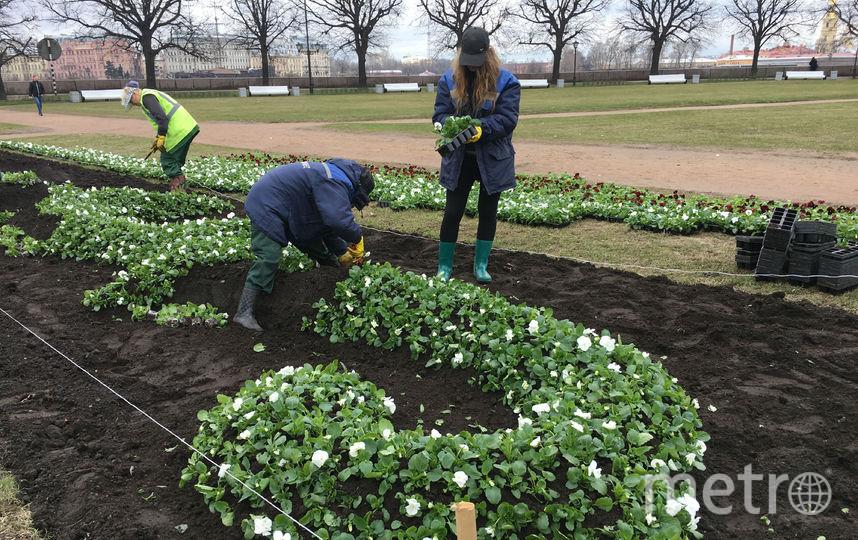 В Петербурге высаживают цветы. Фото gov.spb.ru