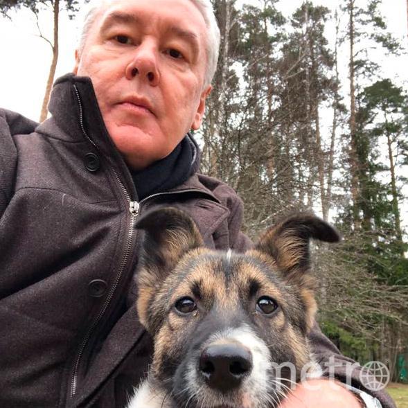 Сергей Собянин со своей собакой. Фото персональный сайт Сергея Собянина