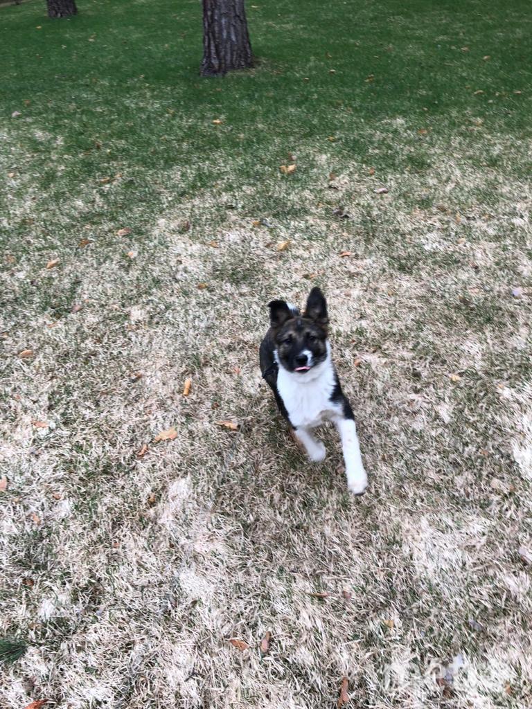 Собака Джоуи на прогулке. Фото персональный сайт Сергея Собянина
