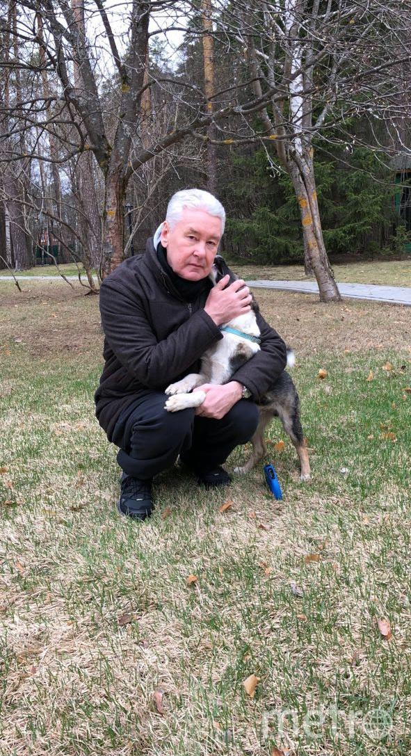 Сергей Собянин со своей собакой на прогулке. Фото персональный сайт Сергея Собянина