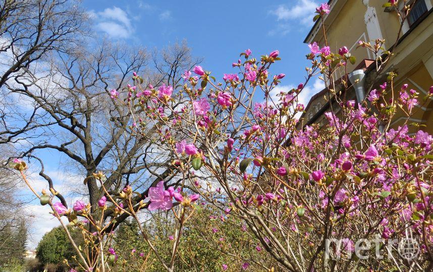 Aестиваль День Подснежника в Ботаническом саду. Фото Ботанический сад