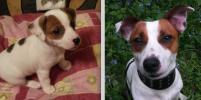Милые щенки и взрослые собаки: фото на конкурс присылают петербуржцы