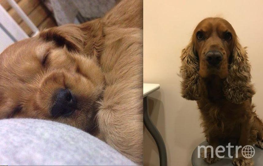 Моего пса зовут Лео! На снимках где он маленький ему 2 месяца. А на снимке где он взрослый 4,5 года. . Фото Мишина Юлия!