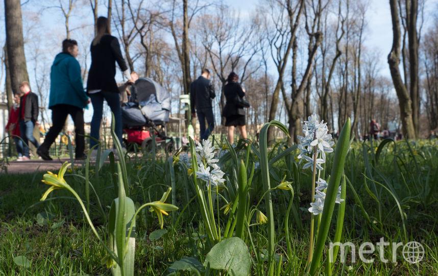 В Петербурге - солнечная погода, местные жители выходят погреться.