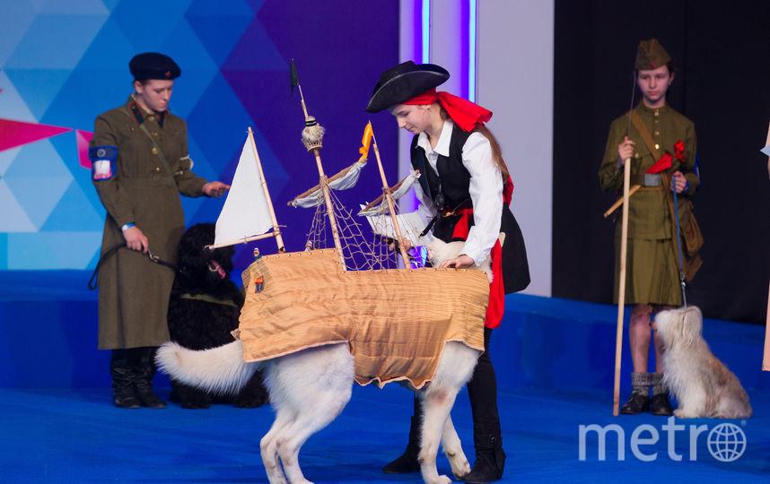 """Выставка собак """"Евразия-2018"""". Фото Василий Кузьмичёнок, """"Metro"""""""