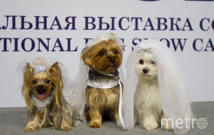 """Одним из самых удачных костюмов на конкурсе был наряд невесты. Фото Василий Кузьмичёнок, """"Metro"""""""
