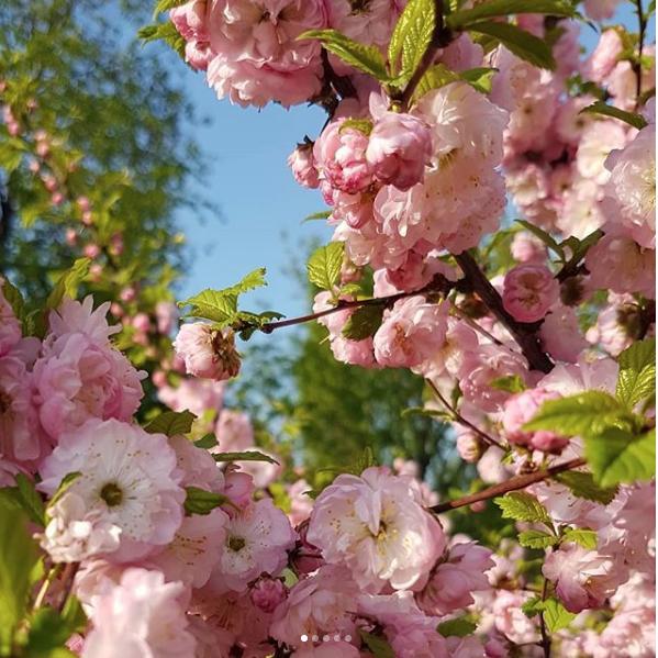 "В парке ""Музеон"". Фото Скриншот instagram.com/zluchko/?hl=ru"
