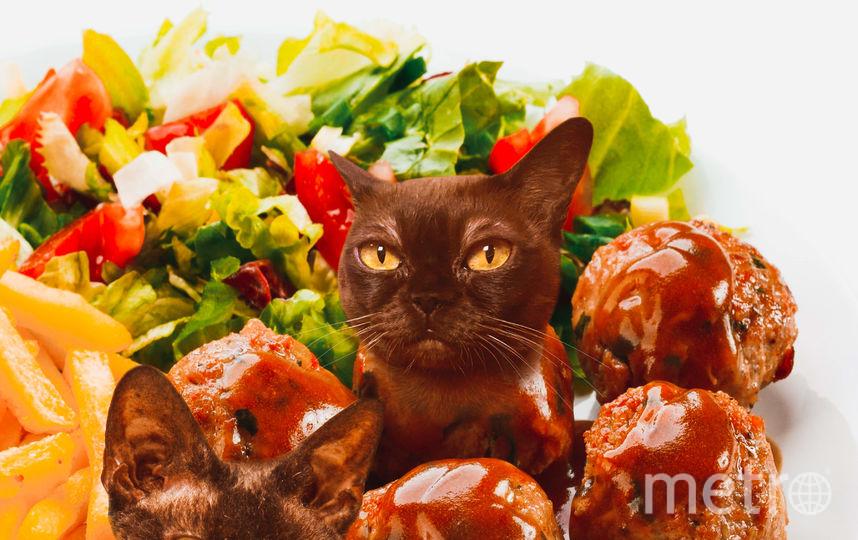 """Выставка """"Официант, у меня в еде котик!"""". Фото Предоставлено котокафе """"Республика кошек""""."""