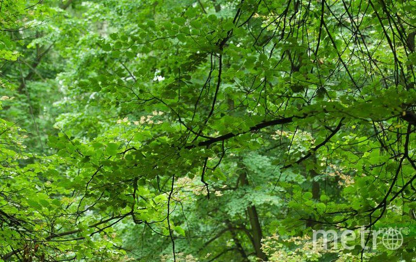 Расположен лес, который может стать для кого-то новым местом работы, в Одинцовском районе. Фото Василий Кузьмичёнок