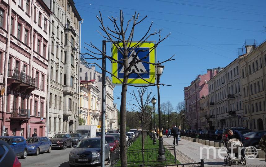 """Деревья на Фурштатской ещё не омолодились. Фото Святослав Акимов, """"Metro"""""""