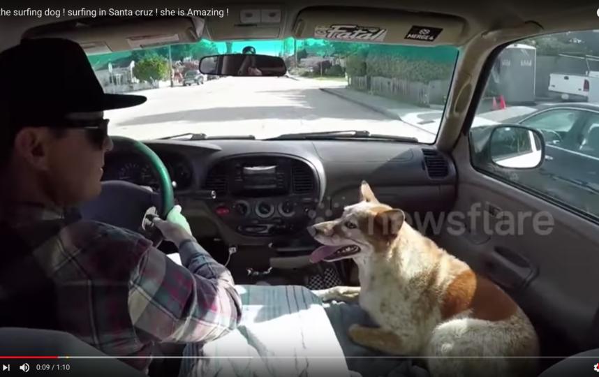 Пёс по имени Скайлер. Фото Скриншот Youtube