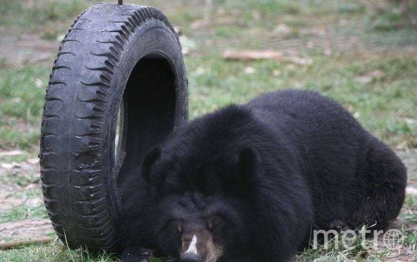 Черный медведь. Фото Getty