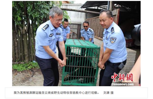 Су Му думал, что купил щенка тибетского мастифа. Фото Скриншот www.chinanews.com