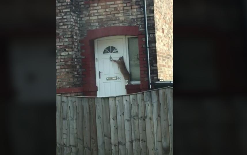 """""""Самый вежливый кот в мире"""" завоевывает Интернет: Видео. Фото Скриншот Facebook."""